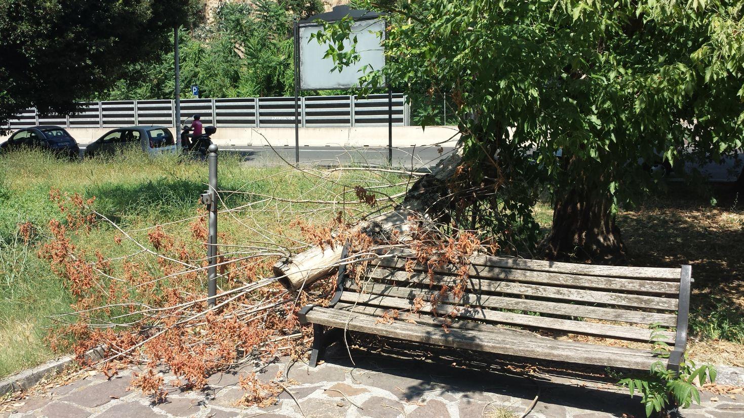 Giardini viale Tiziano degrado 6