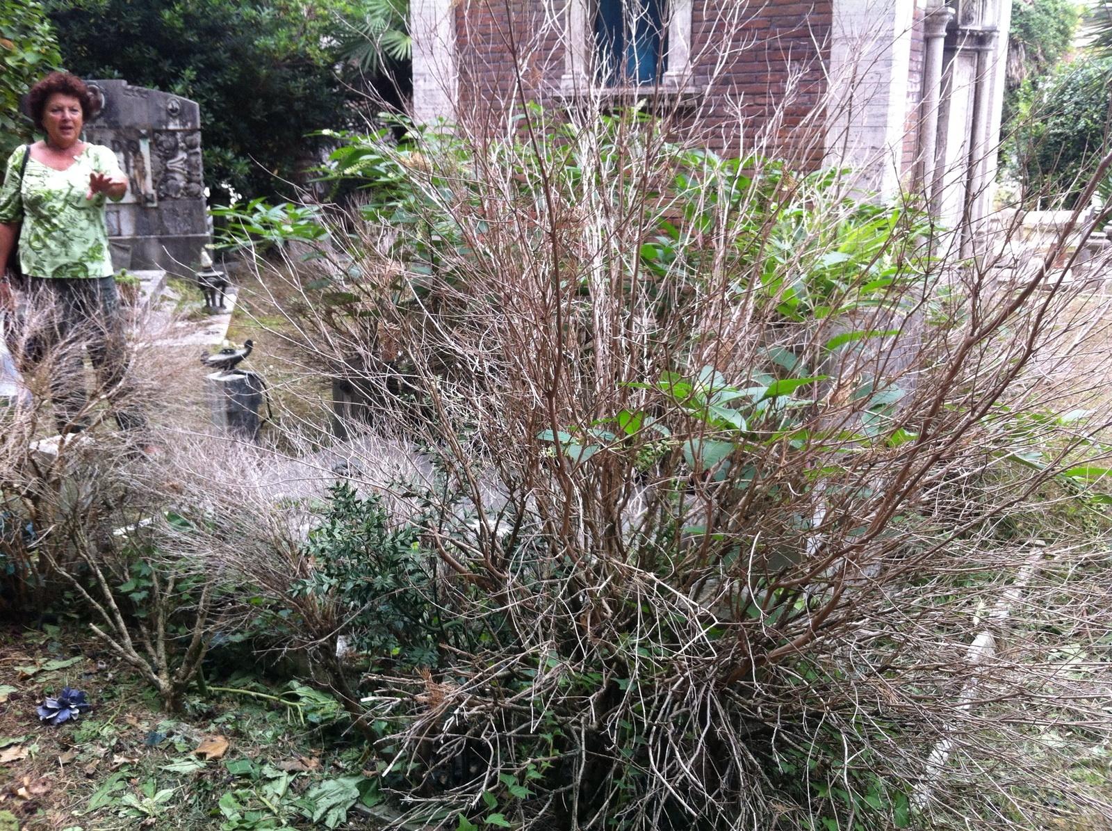 Cimitero Verano degrado 5