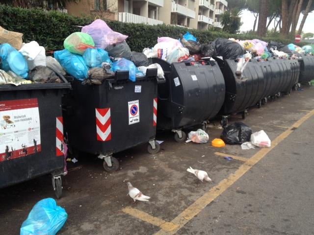 rifiuti e piccioni