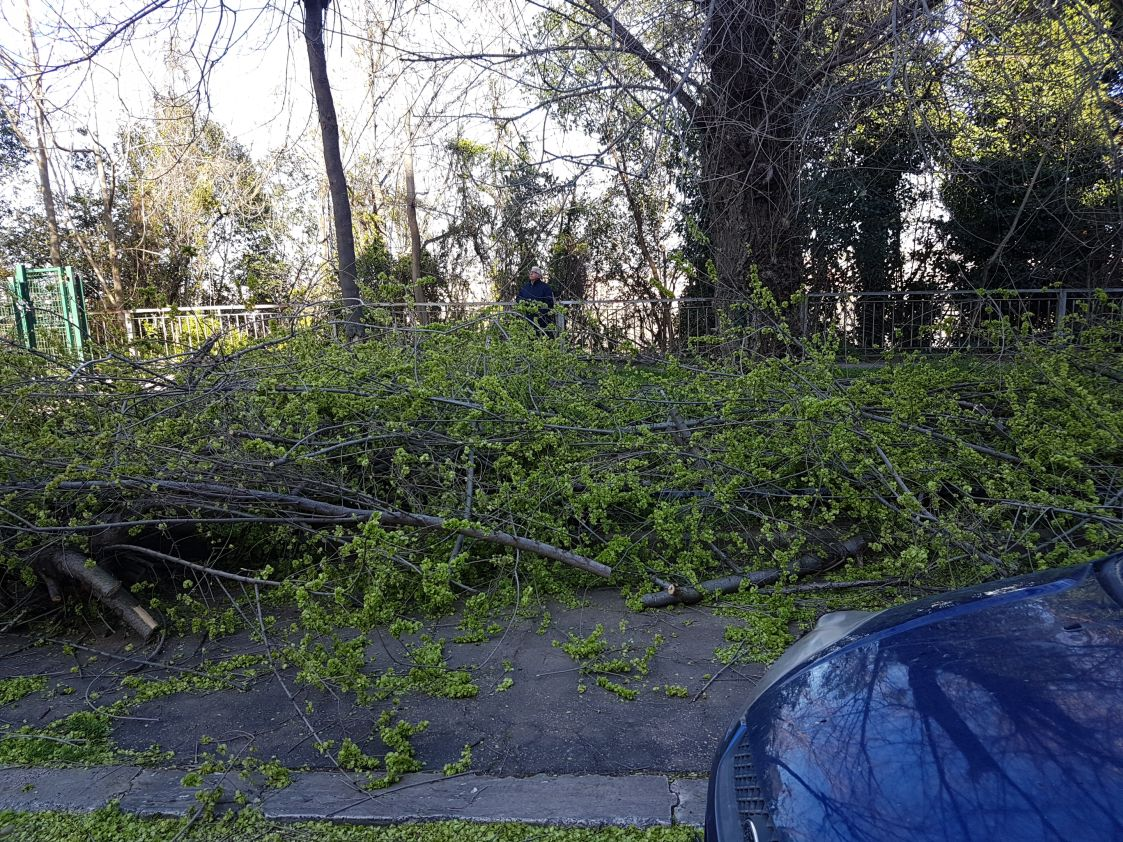 albero caduto via mascagni 2