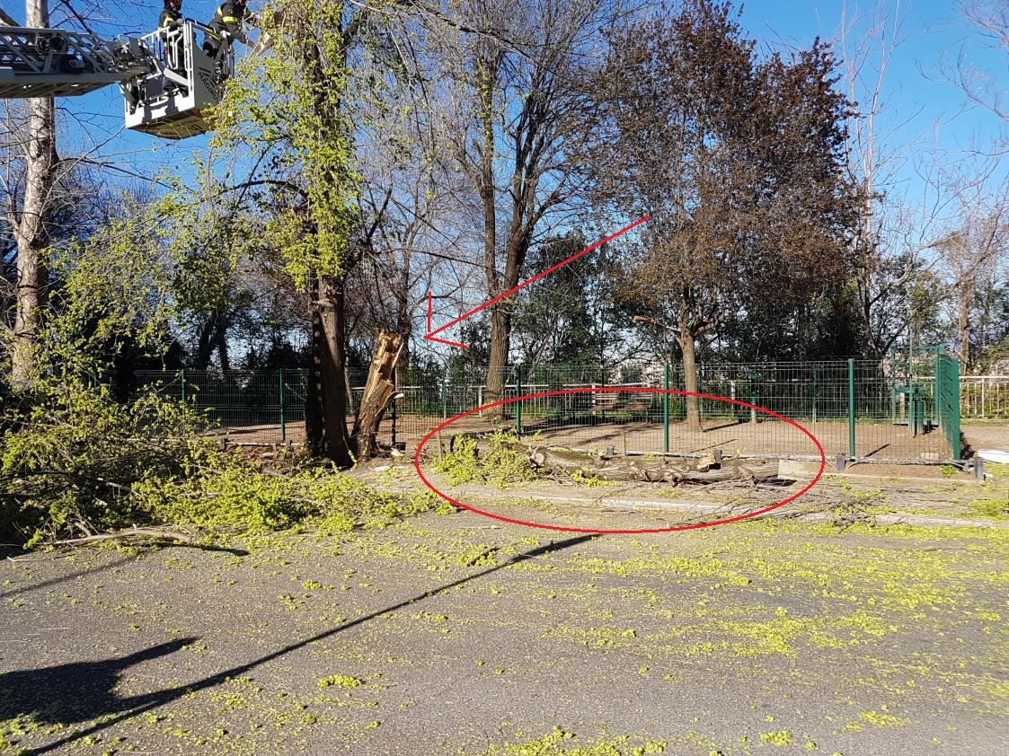 albero caduto via mascagni 3
