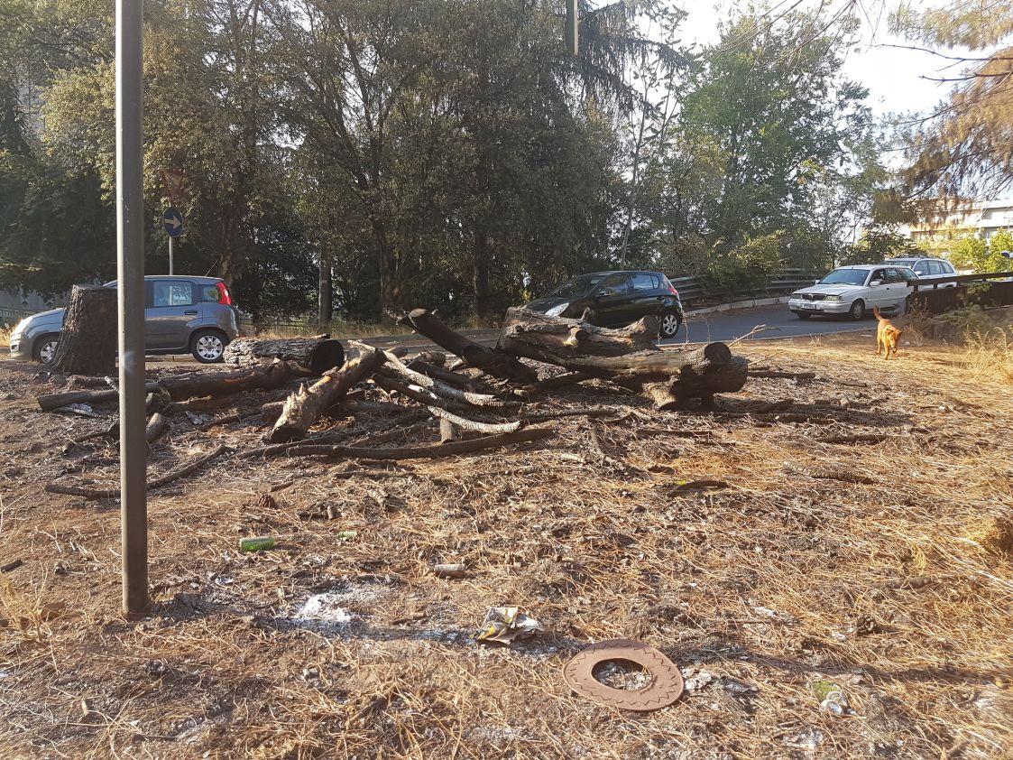 Incendio alberi viale Etiopia