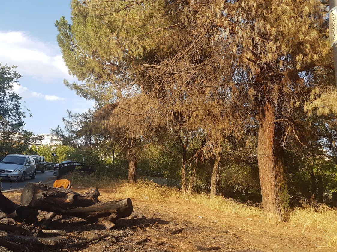 Incendio alberi viale Etiopia2