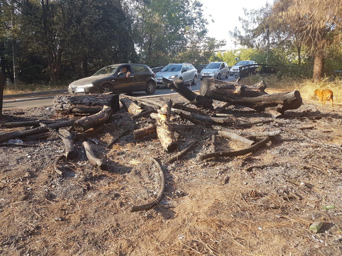 Incendio alberi viale Etiopia3