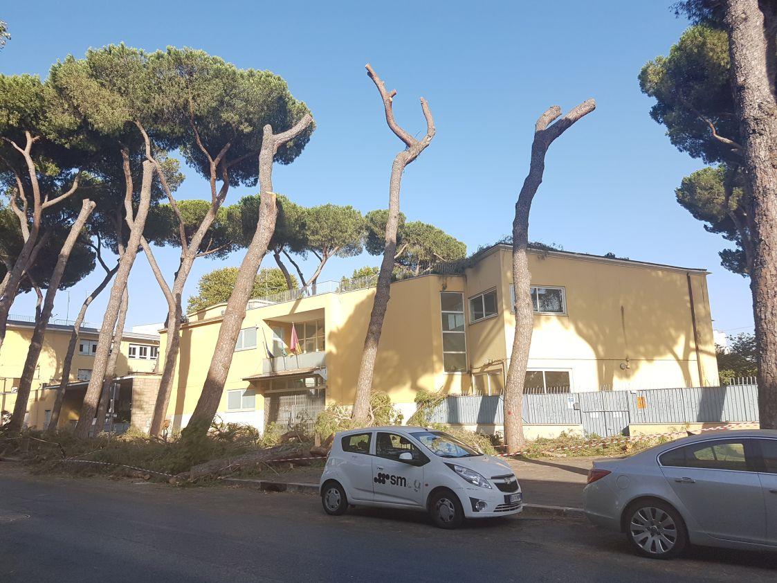potatura alberi 2