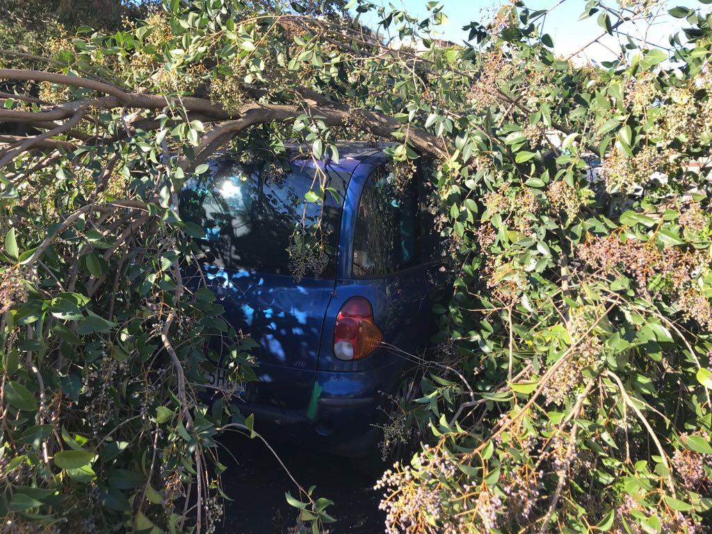 albero caduto3