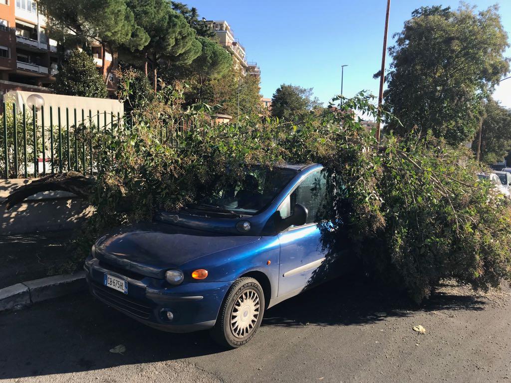 albero caduto5
